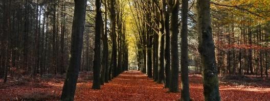 autumn-3764-528x350